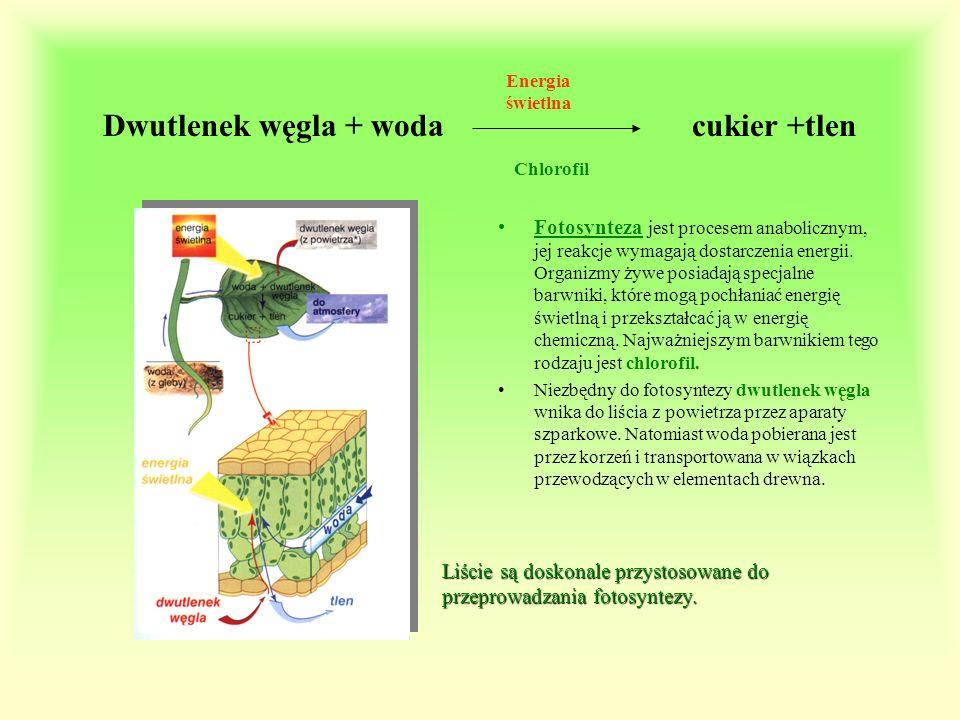 Dwutlenek węgla + woda cukier +tlen