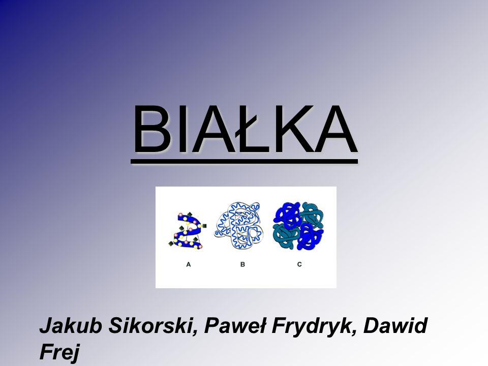 Jakub Sikorski, Paweł Frydryk, Dawid Frej