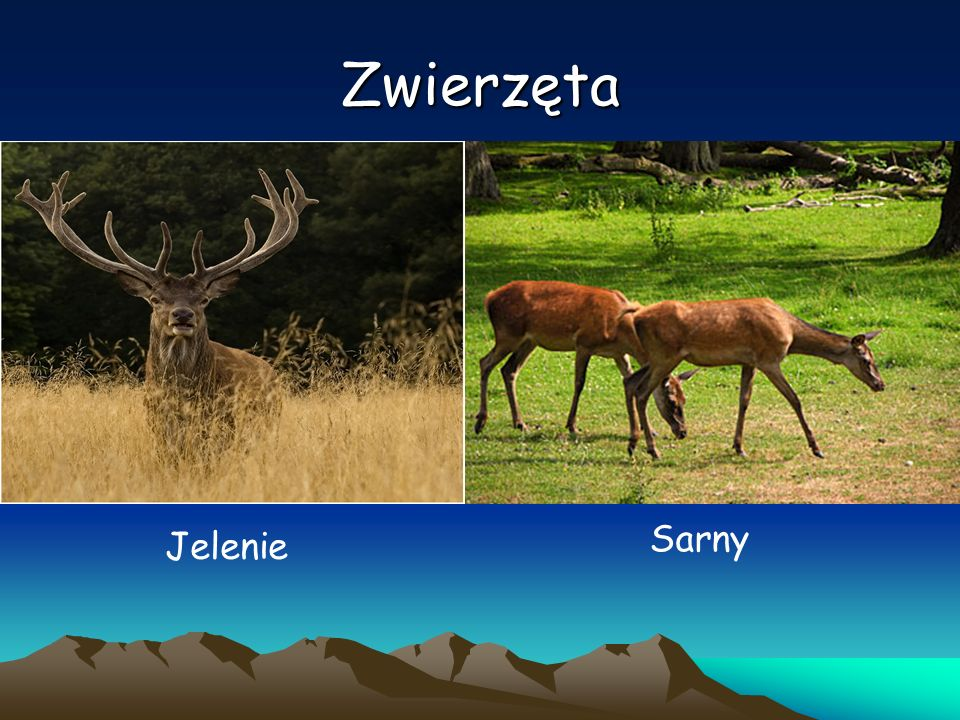 Zwierzęta Sarny Jelenie