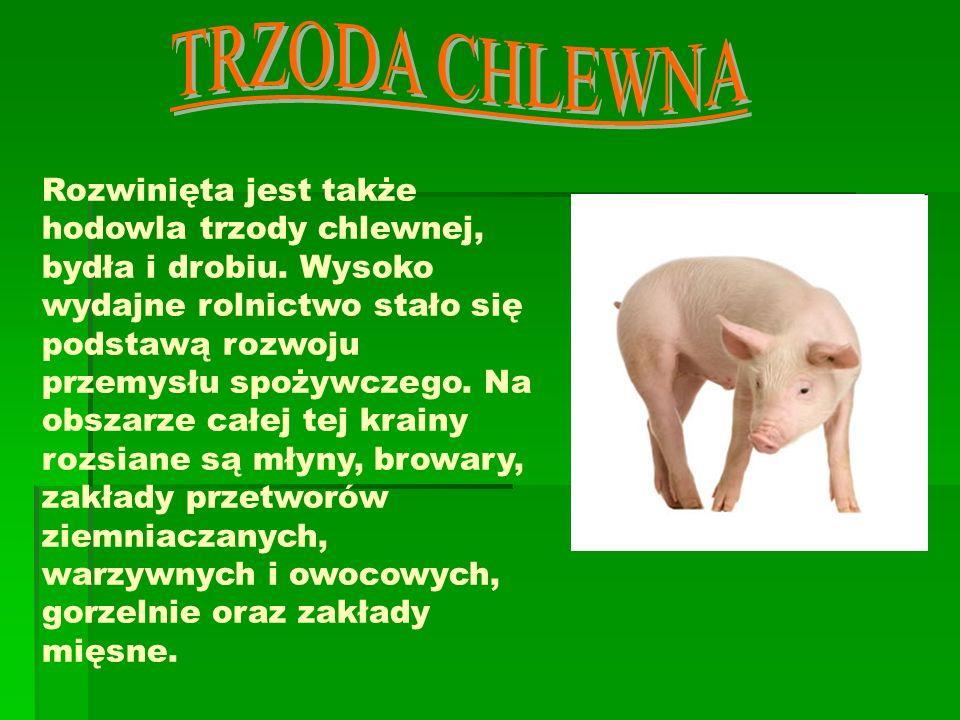 TRZODA CHLEWNA