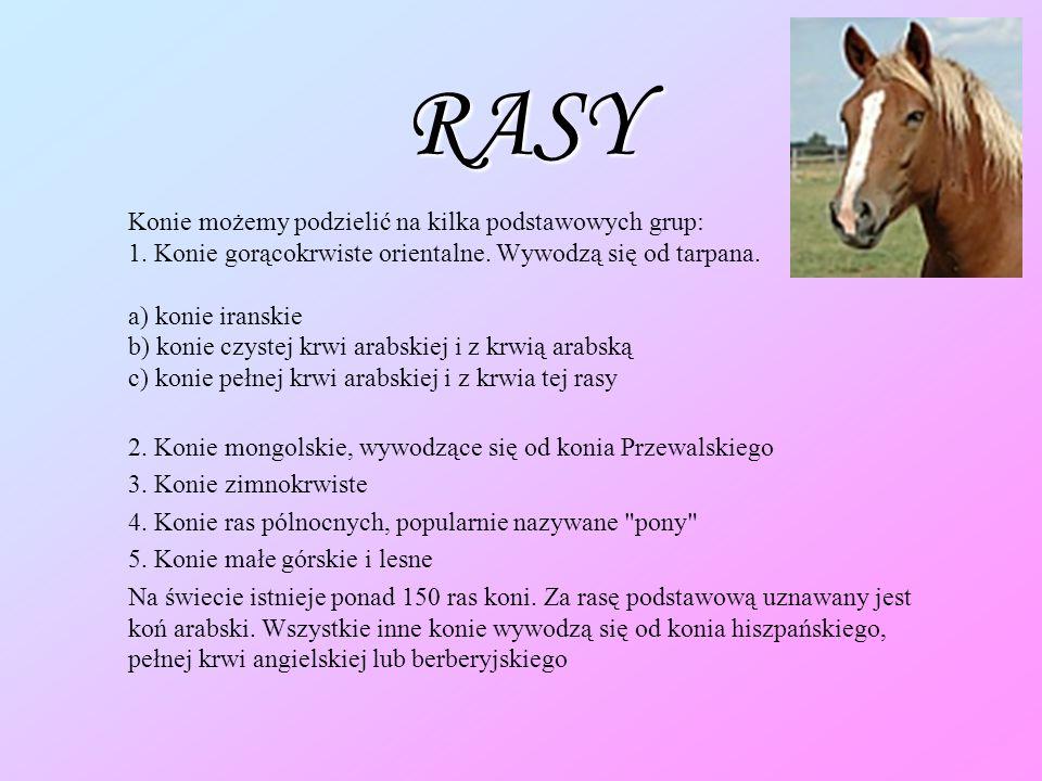 RASY 2. Konie mongolskie, wywodzące się od konia Przewalskiego