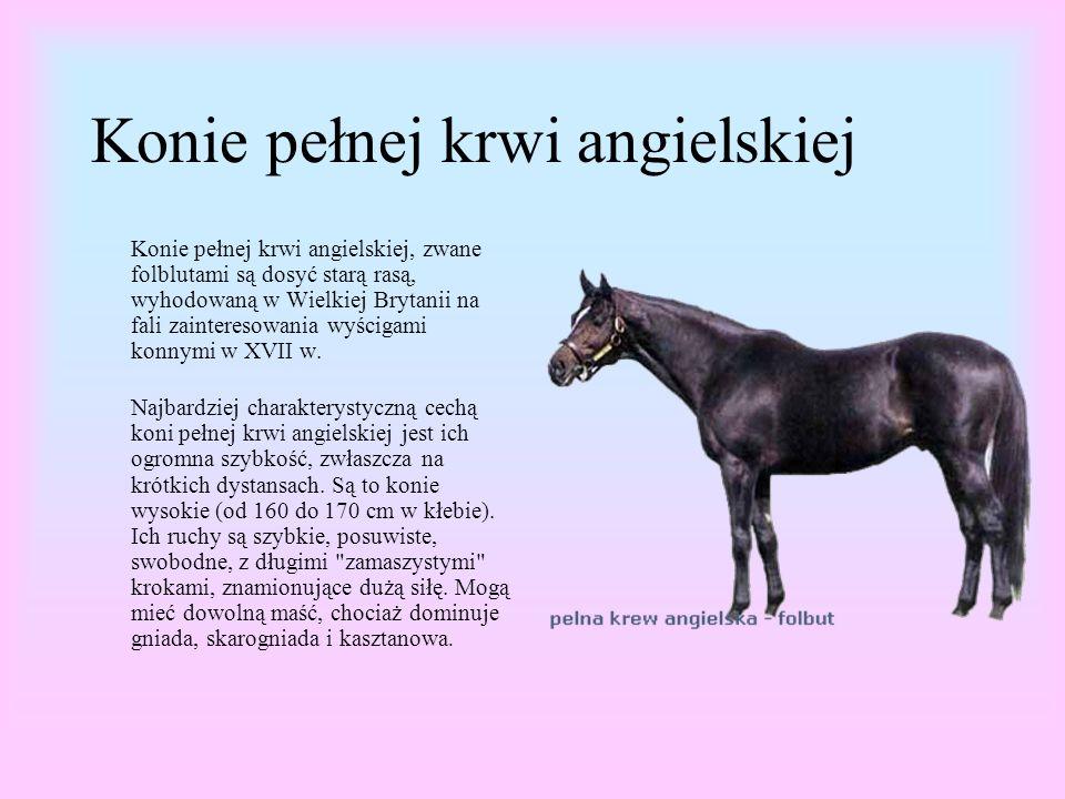 Konie pełnej krwi angielskiej