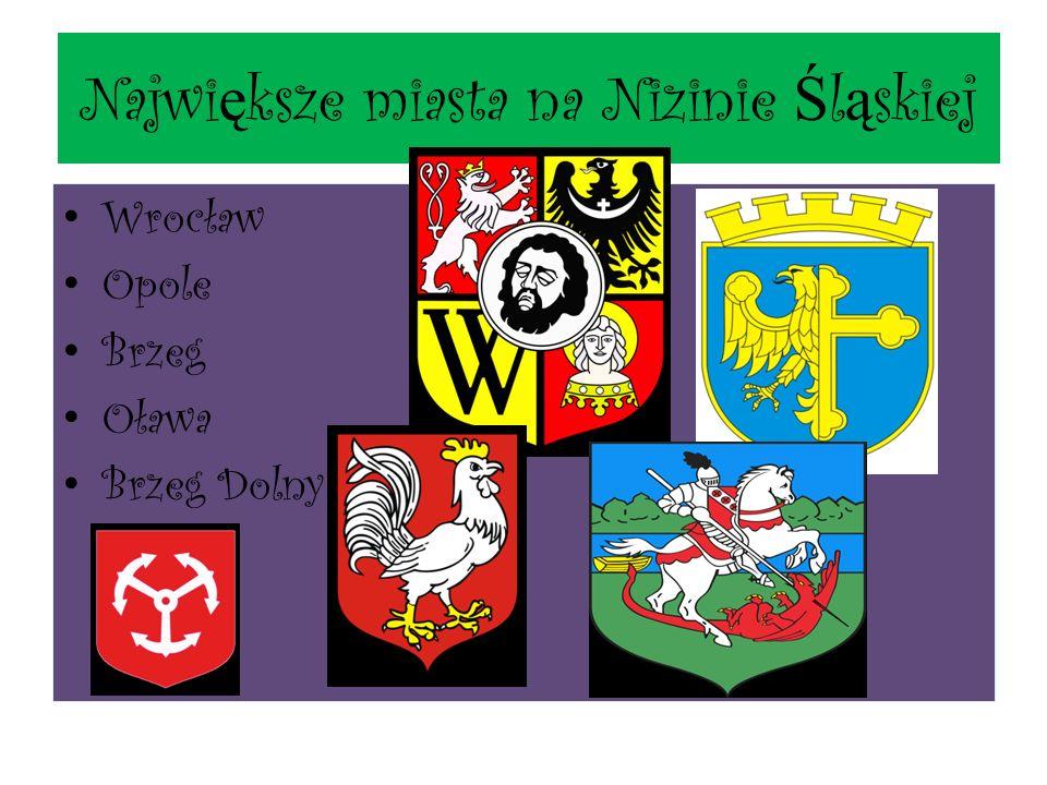 Największe miasta na Nizinie Śląskiej