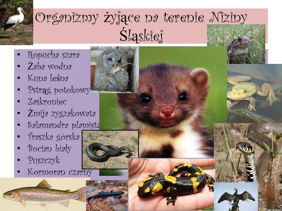 Organizmy żyjące na terenie Niziny Śląskiej