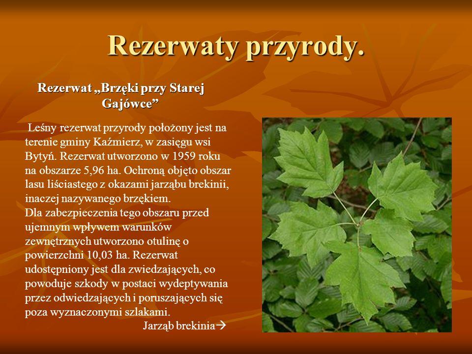 """Rezerwat """"Brzęki przy Starej Gajówce"""