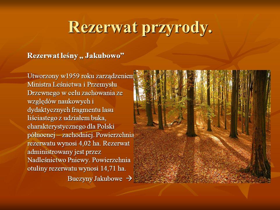 """Rezerwat leśny """" Jakubowo"""