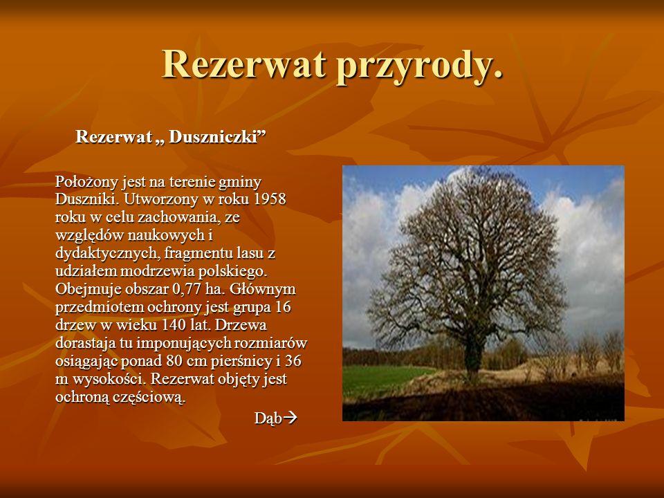 Rezerwat przyrody. Rezerwat ,, Duszniczki