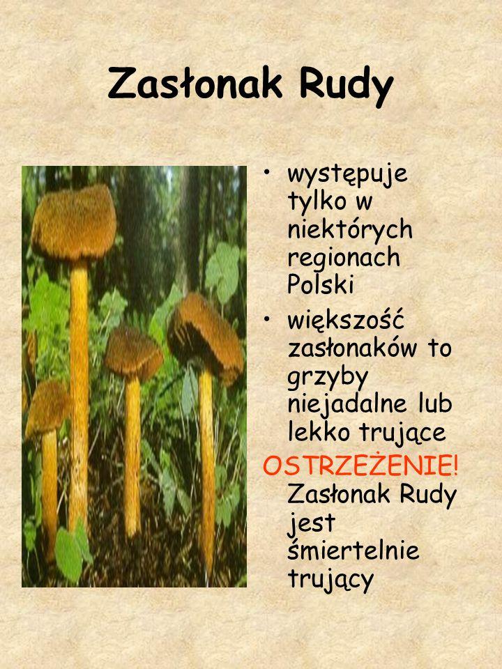 Zasłonak Rudy występuje tylko w niektórych regionach Polski