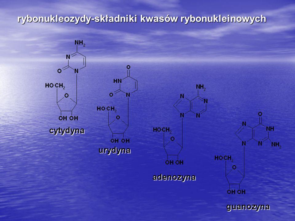rybonukleozydy-składniki kwasów rybonukleinowych