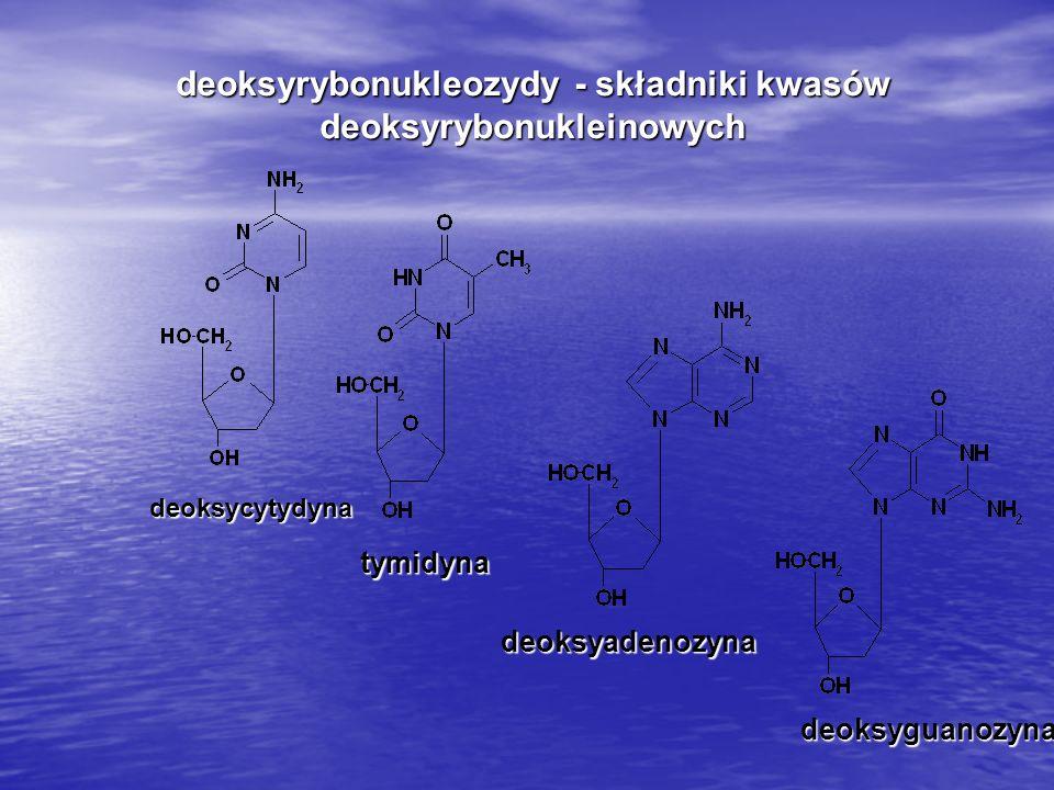 deoksyrybonukleozydy - składniki kwasów deoksyrybonukleinowych