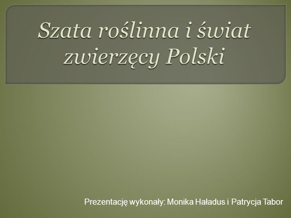 Szata roślinna i świat zwierzęcy Polski