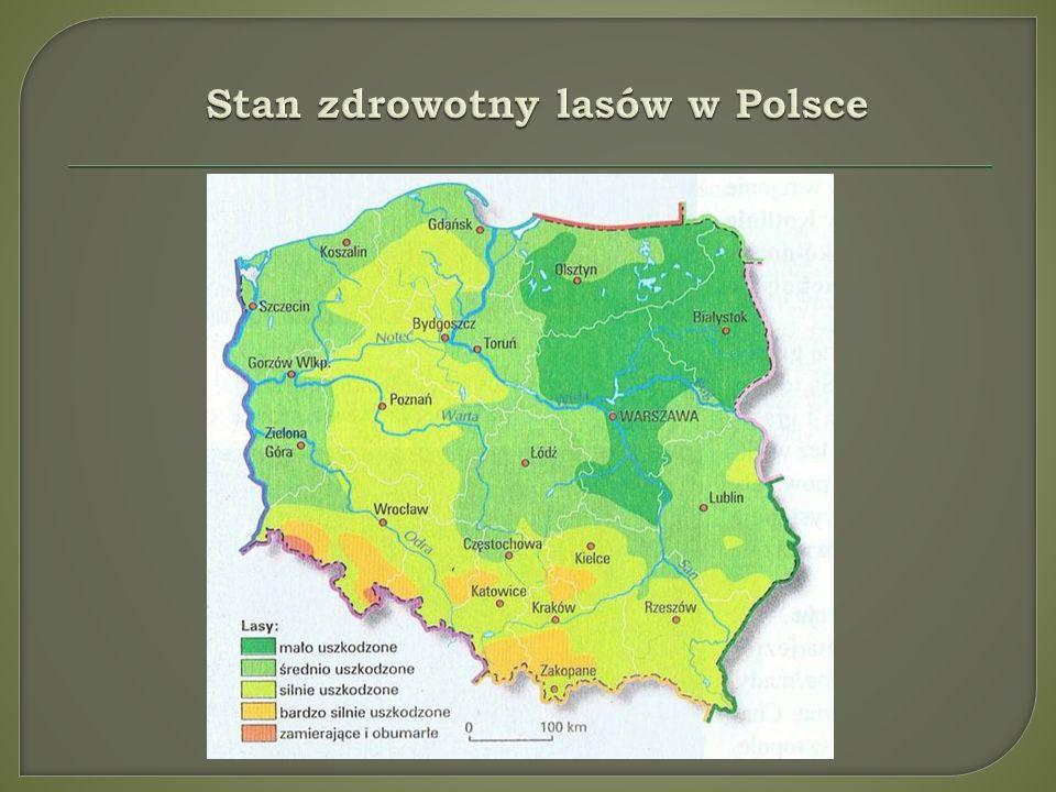 Stan zdrowotny lasów w Polsce