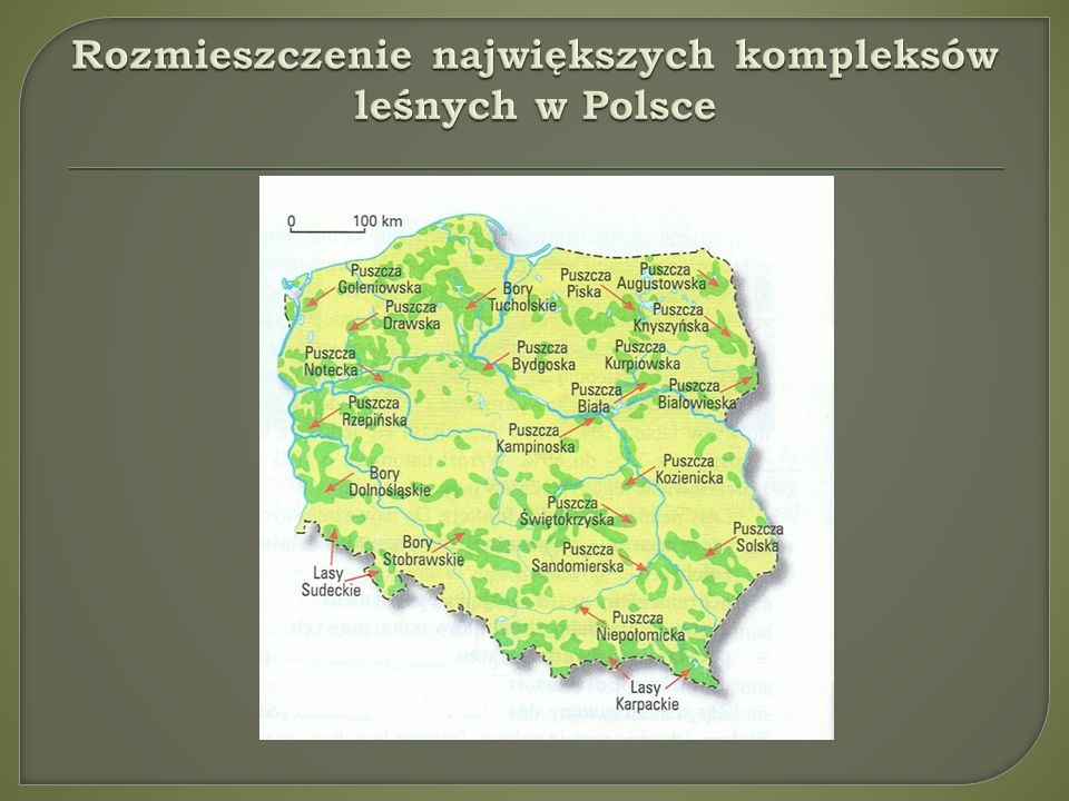 Rozmieszczenie największych kompleksów leśnych w Polsce