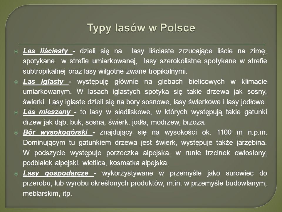 Typy lasów w Polsce