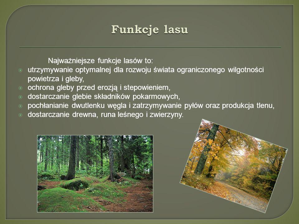 Funkcje lasu Najważniejsze funkcje lasów to: