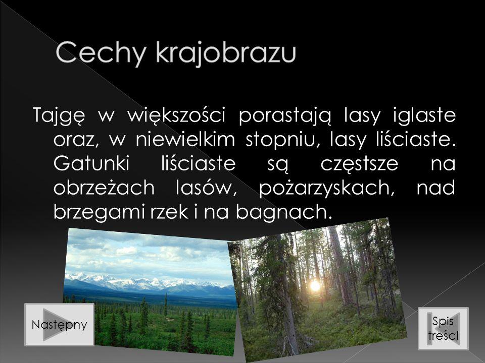 Cechy krajobrazu