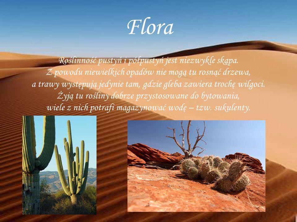Flora Roślinność pustyń i półpustyń jest niezwykle skąpa.
