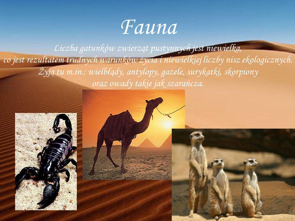 Fauna Liczba gatunków zwierząt pustynnych jest niewielka,