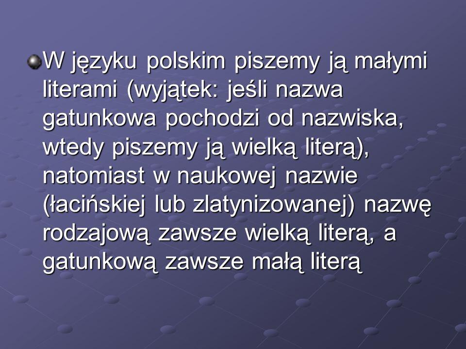 W języku polskim piszemy ją małymi literami (wyjątek: jeśli nazwa gatunkowa pochodzi od nazwiska, wtedy piszemy ją wielką literą), natomiast w naukowej nazwie (łacińskiej lub zlatynizowanej) nazwę rodzajową zawsze wielką literą, a gatunkową zawsze małą literą