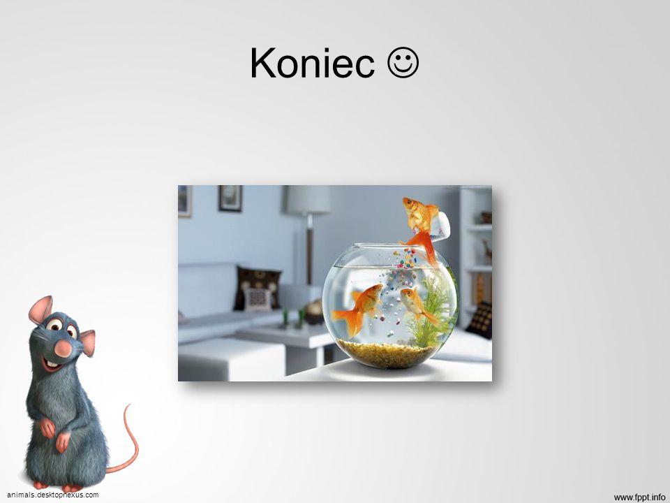 Koniec  animals.desktopnexus.com
