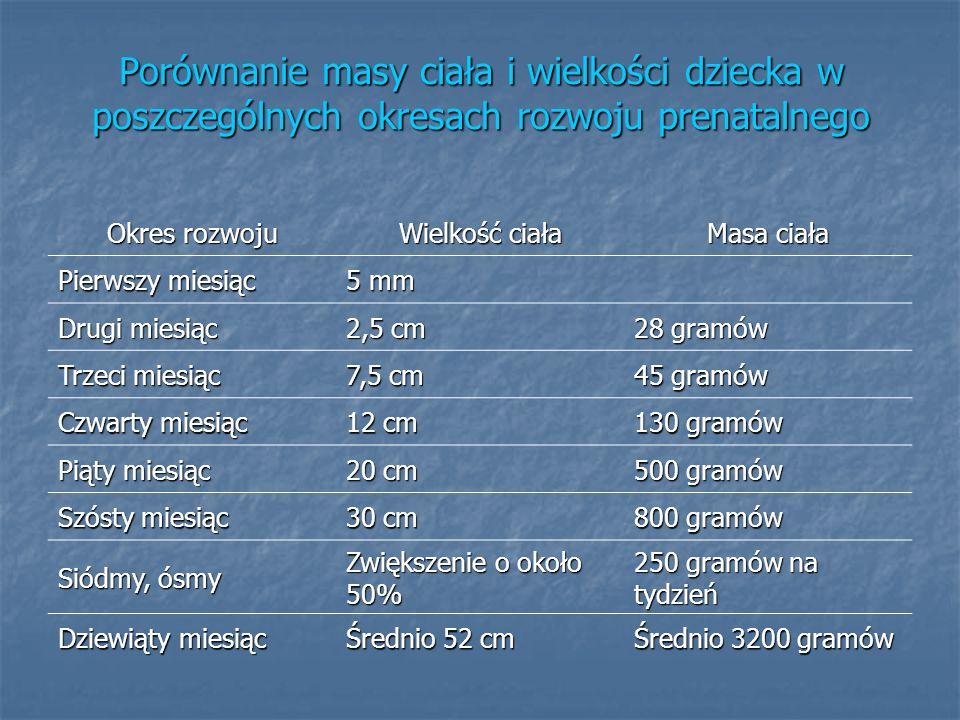 Porównanie masy ciała i wielkości dziecka w poszczególnych okresach rozwoju prenatalnego