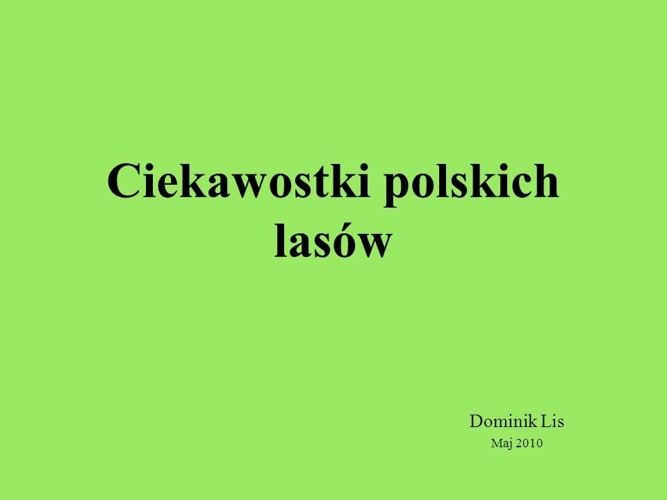 Ciekawostki polskich lasów