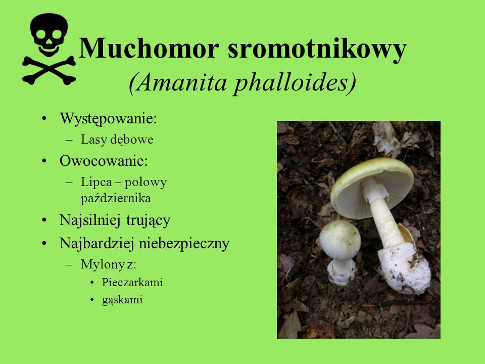 Muchomor sromotnikowy (Amanita phalloides)