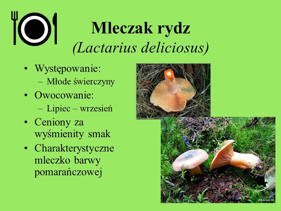 Mleczak rydz (Lactarius deliciosus)