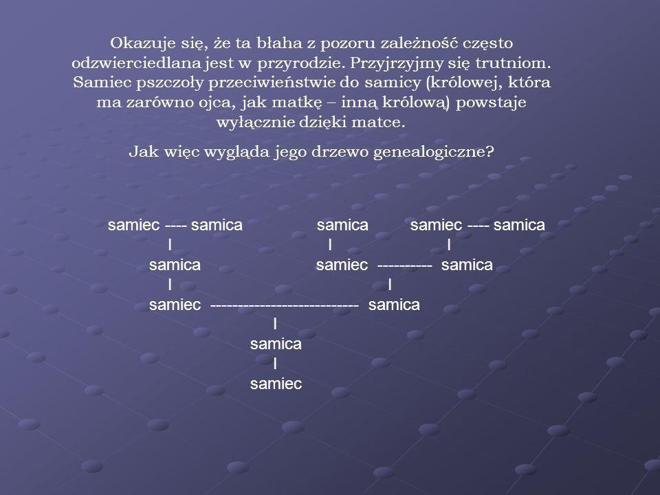 Jak więc wygląda jego drzewo genealogiczne