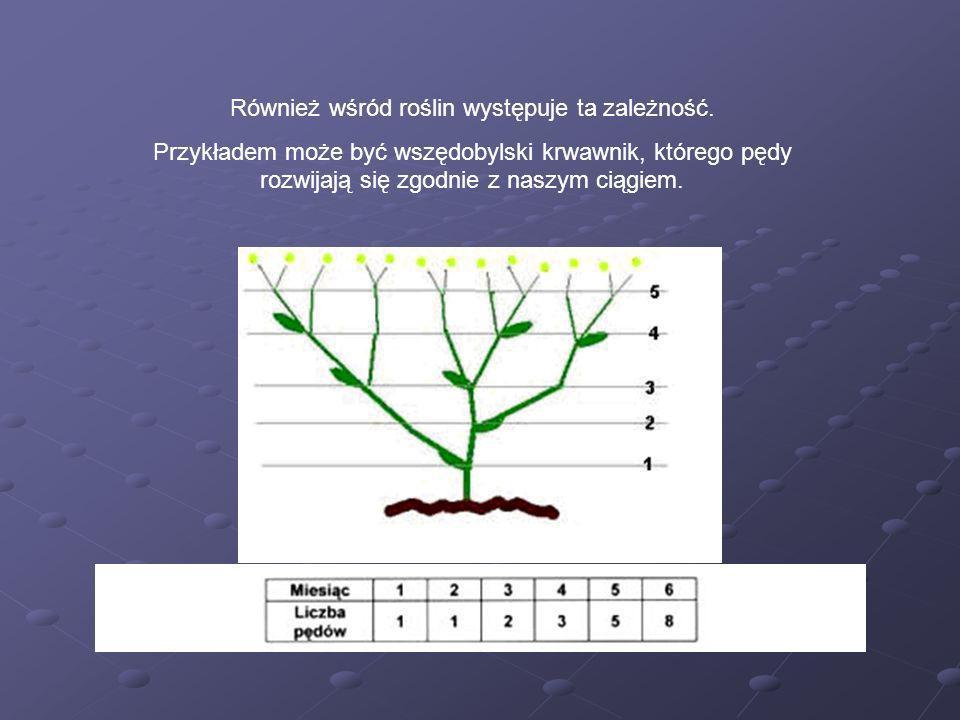 Również wśród roślin występuje ta zależność.