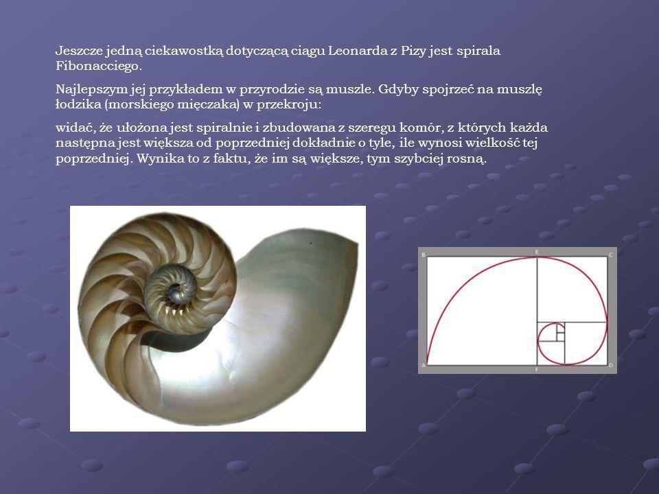 Jeszcze jedną ciekawostką dotyczącą ciągu Leonarda z Pizy jest spirala Fibonacciego.