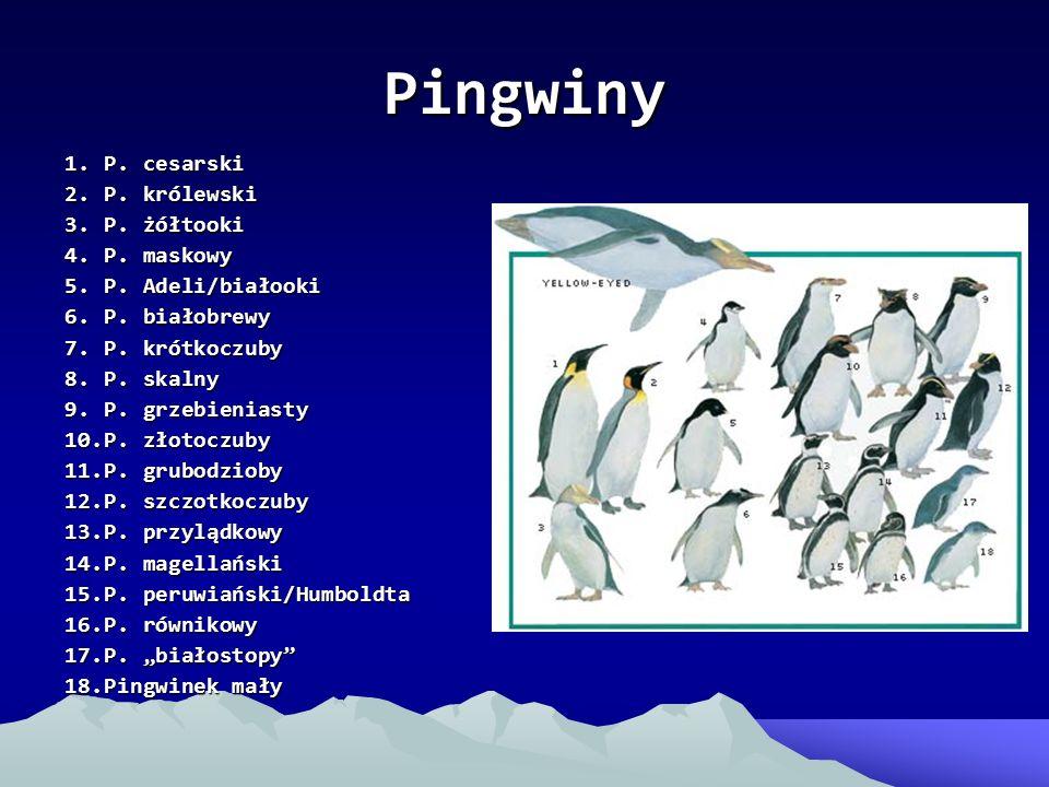 Pingwiny 1. P. cesarski 2. P. królewski 3. P. żółtooki 4. P. maskowy