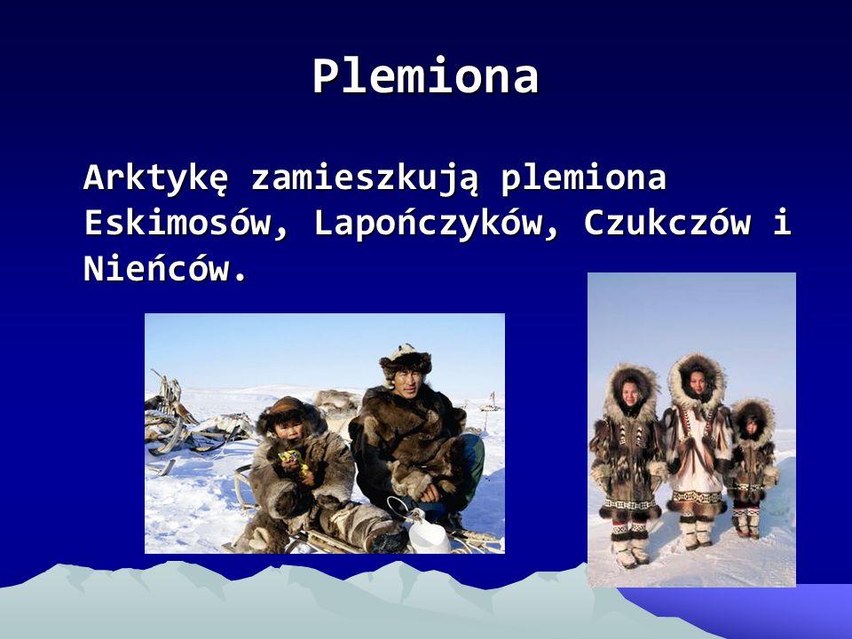 Plemiona Arktykę zamieszkują plemiona Eskimosów, Lapończyków, Czukczów i Nieńców.