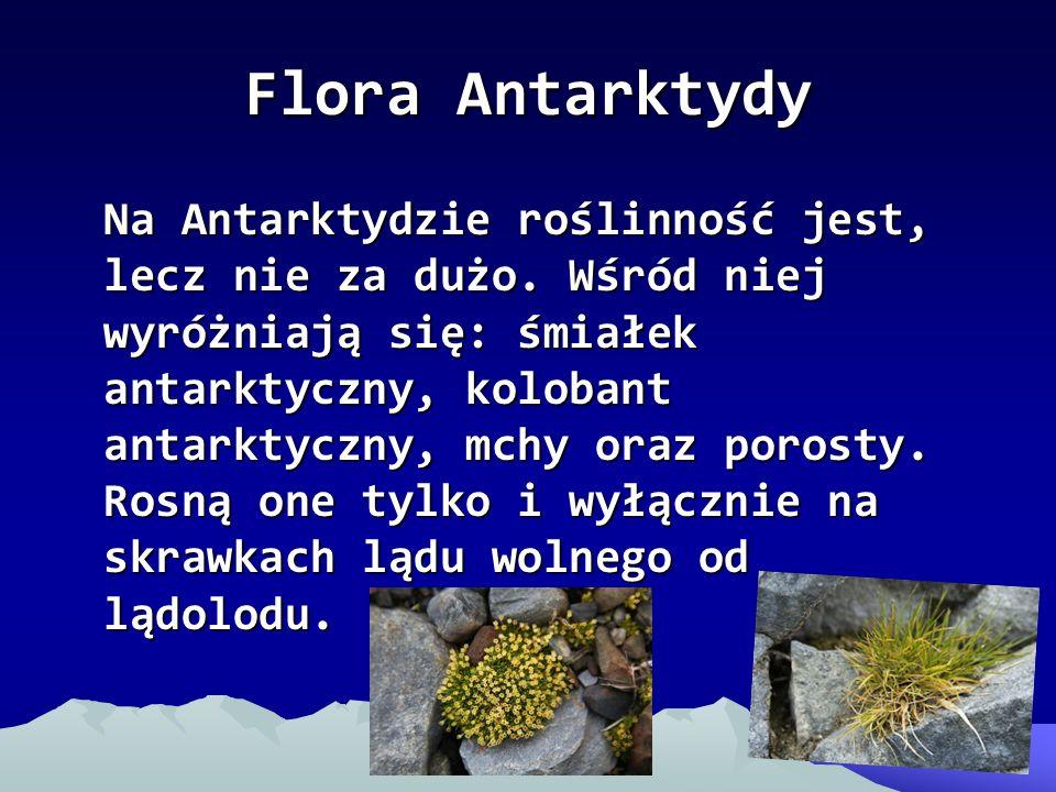 Flora Antarktydy