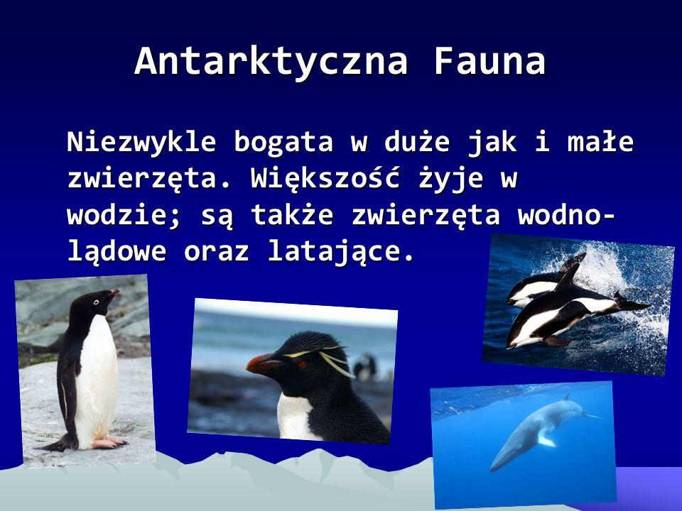Antarktyczna Fauna Niezwykle bogata w duże jak i małe zwierzęta.
