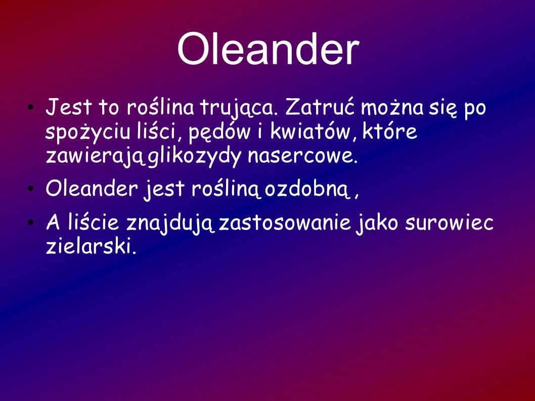 OleanderJest to roślina trująca. Zatruć można się po spożyciu liści, pędów i kwiatów, które zawierają glikozydy nasercowe.