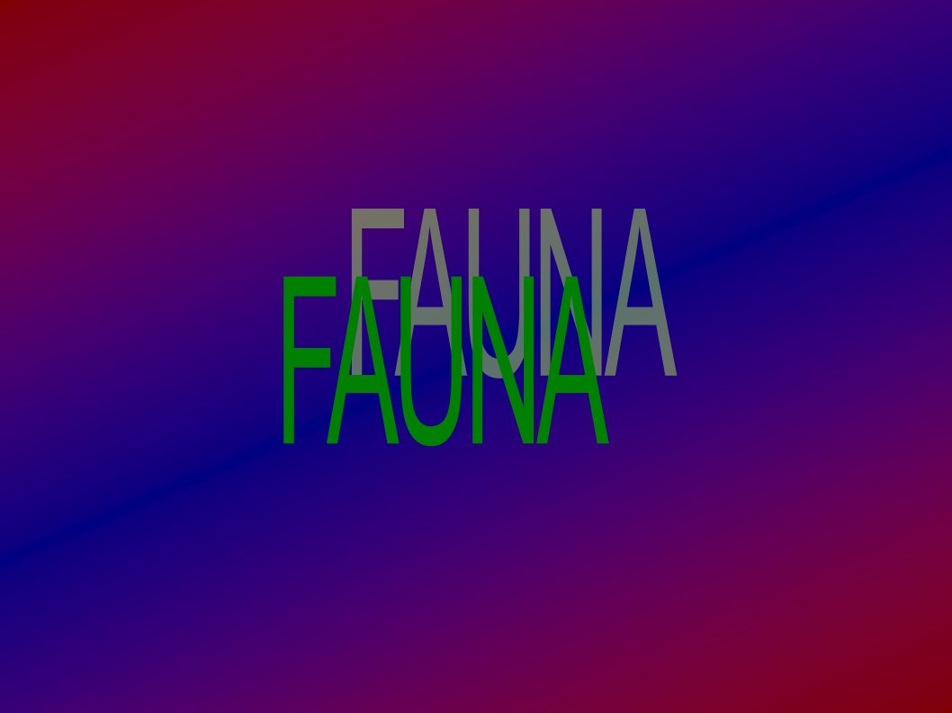 FAUNA 4
