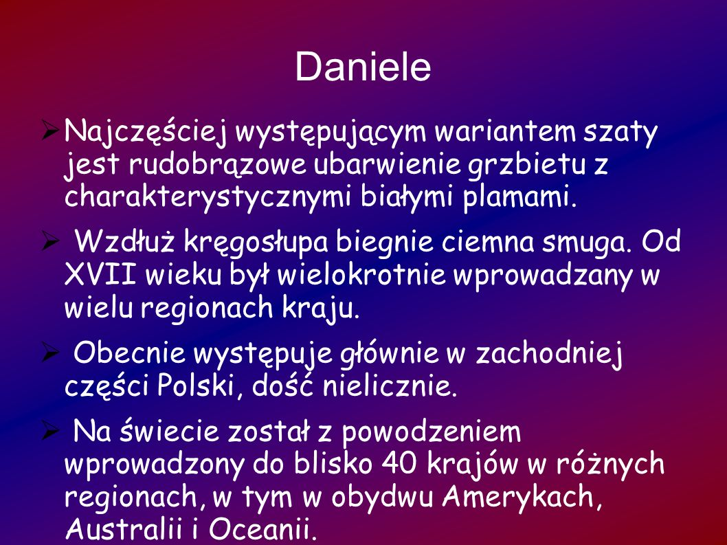 Daniele Najczęściej występującym wariantem szaty jest rudobrązowe ubarwienie grzbietu z charakterystycznymi białymi plamami.