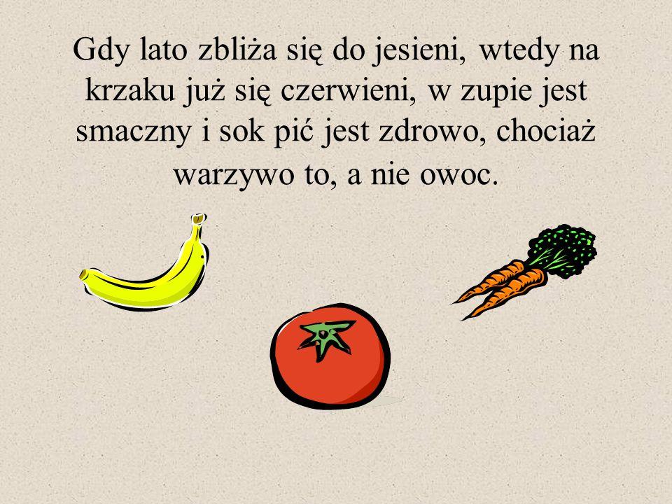 Gdy lato zbliża się do jesieni, wtedy na krzaku już się czerwieni, w zupie jest smaczny i sok pić jest zdrowo, chociaż warzywo to, a nie owoc.
