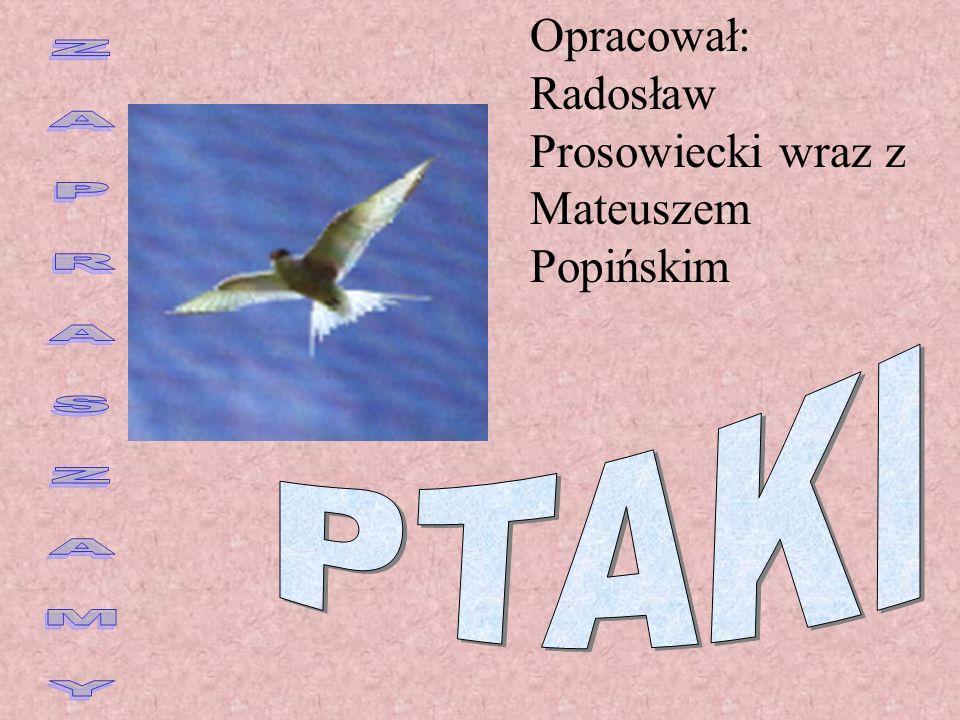 Opracował: Radosław Prosowiecki wraz z Mateuszem Popińskim