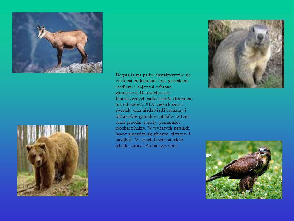 Bogata fauna parku charakteryzuje się wieloma endemitami oraz gatunkami rzadkimi i objętymi ochroną gatunkową.