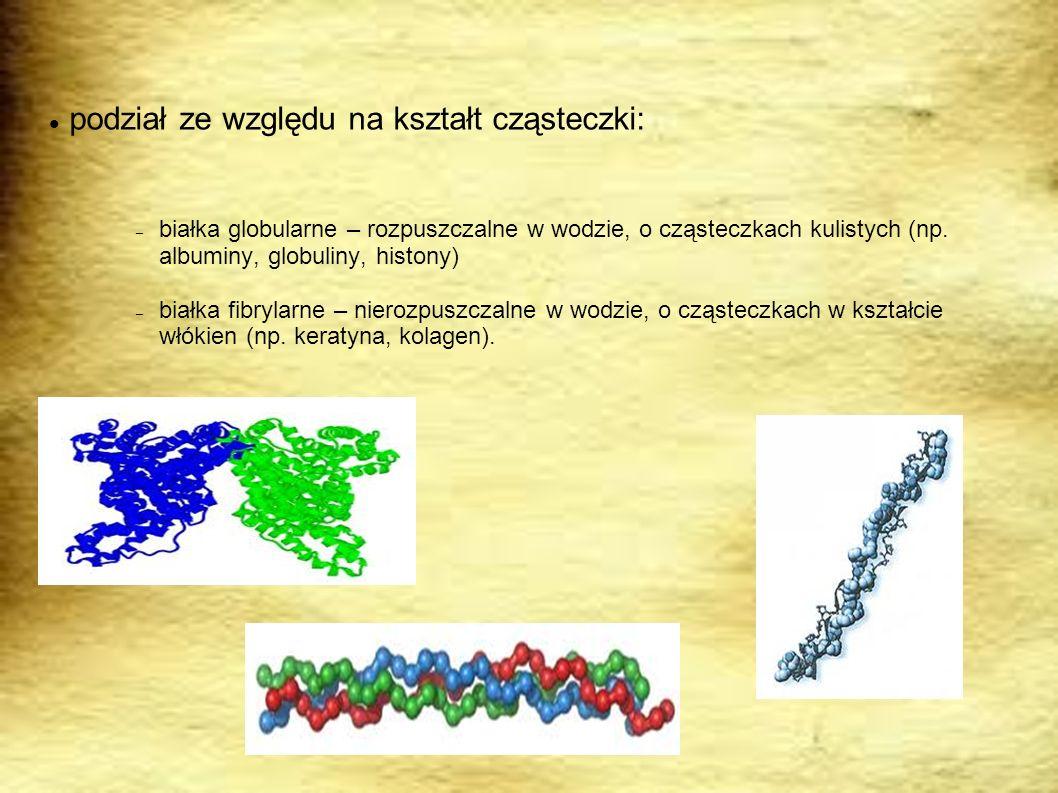 podział ze względu na kształt cząsteczki: