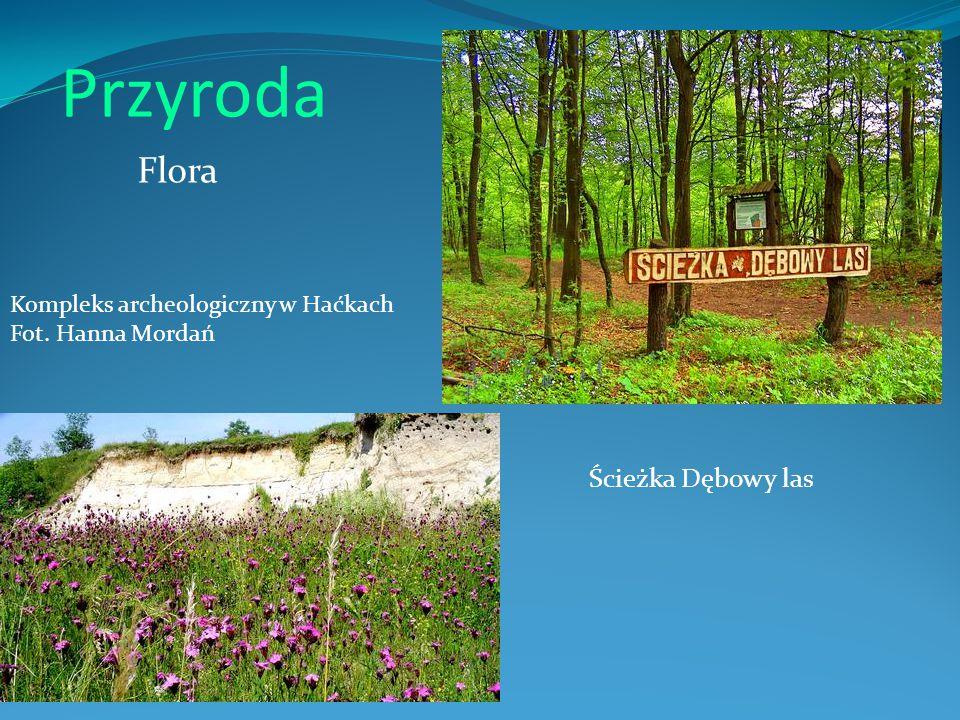 Przyroda Flora Ścieżka Dębowy las Kompleks archeologiczny w Haćkach