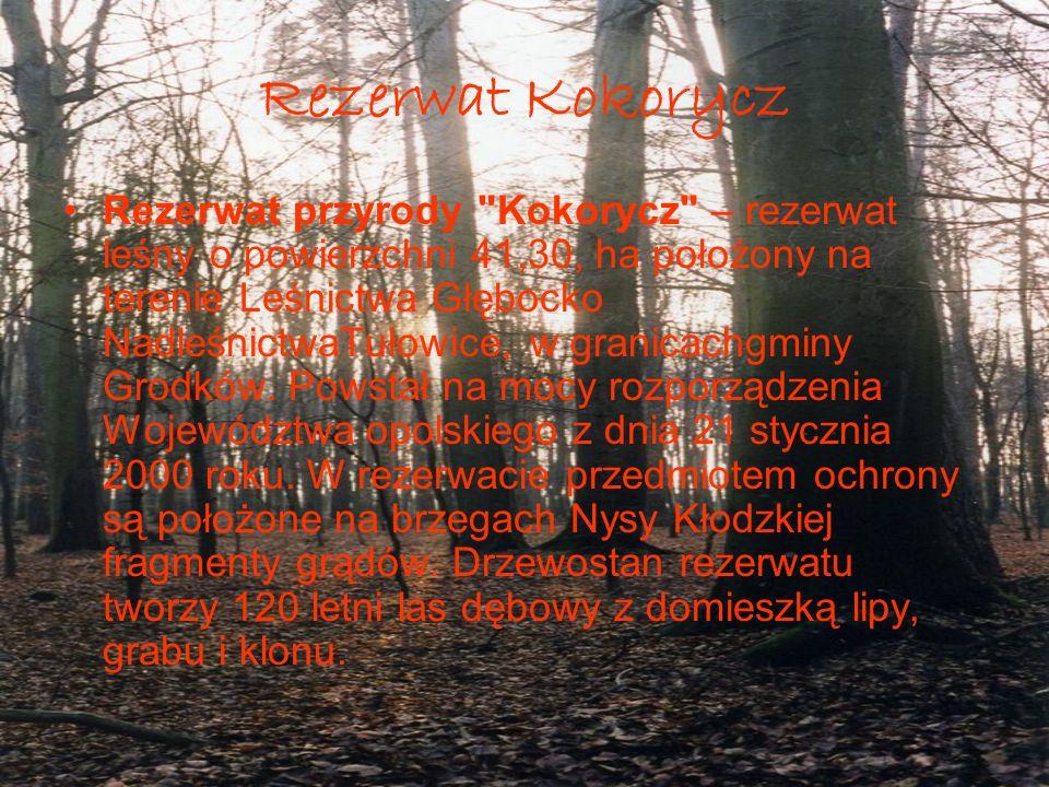 Rezerwat Kokorycz