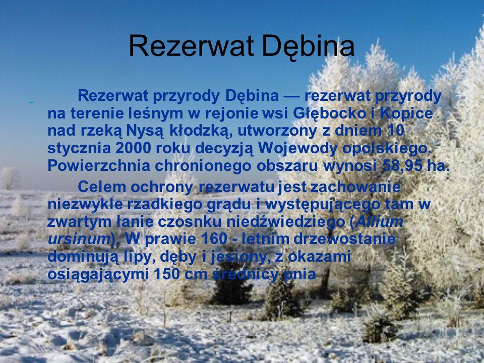 Rezerwat Dębina