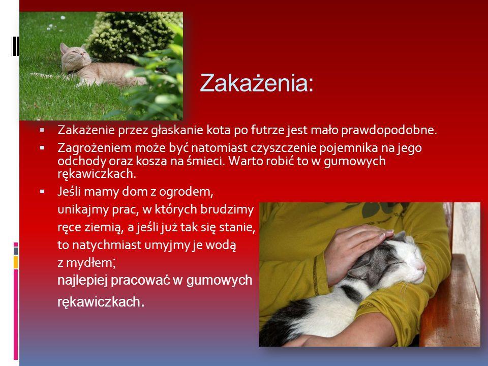 Zakażenia: Zakażenie przez głaskanie kota po futrze jest mało prawdopodobne.