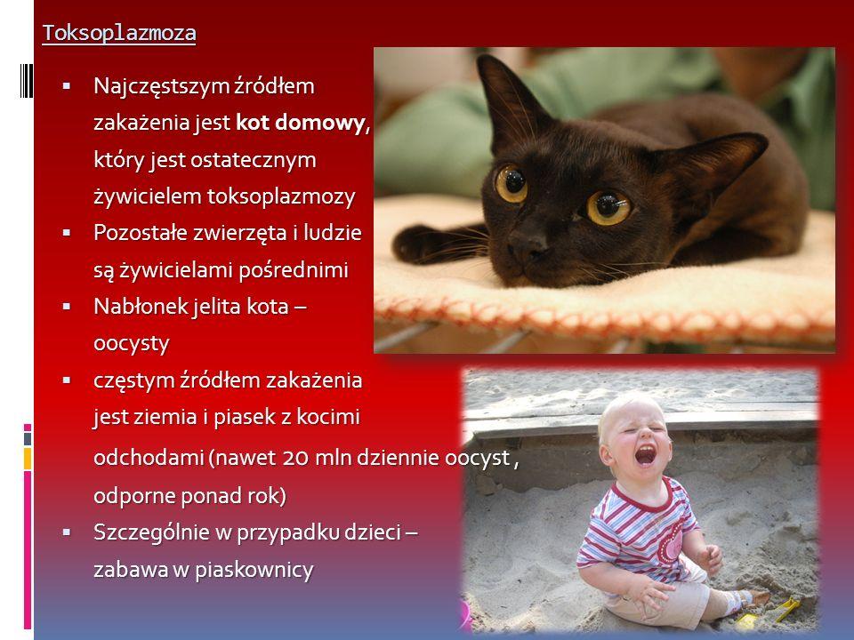 Toksoplazmoza Najczęstszym źródłem. zakażenia jest kot domowy, który jest ostatecznym. żywicielem toksoplazmozy.