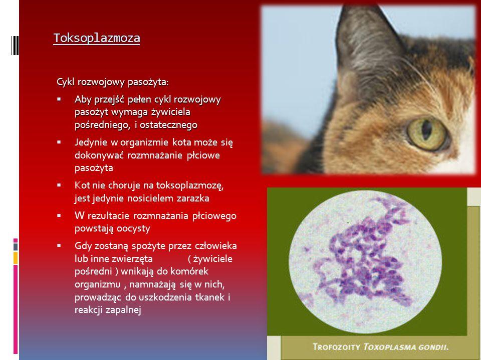 Toksoplazmoza Cykl rozwojowy pasożyta: