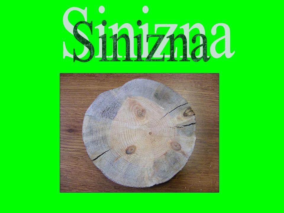 Sinizna