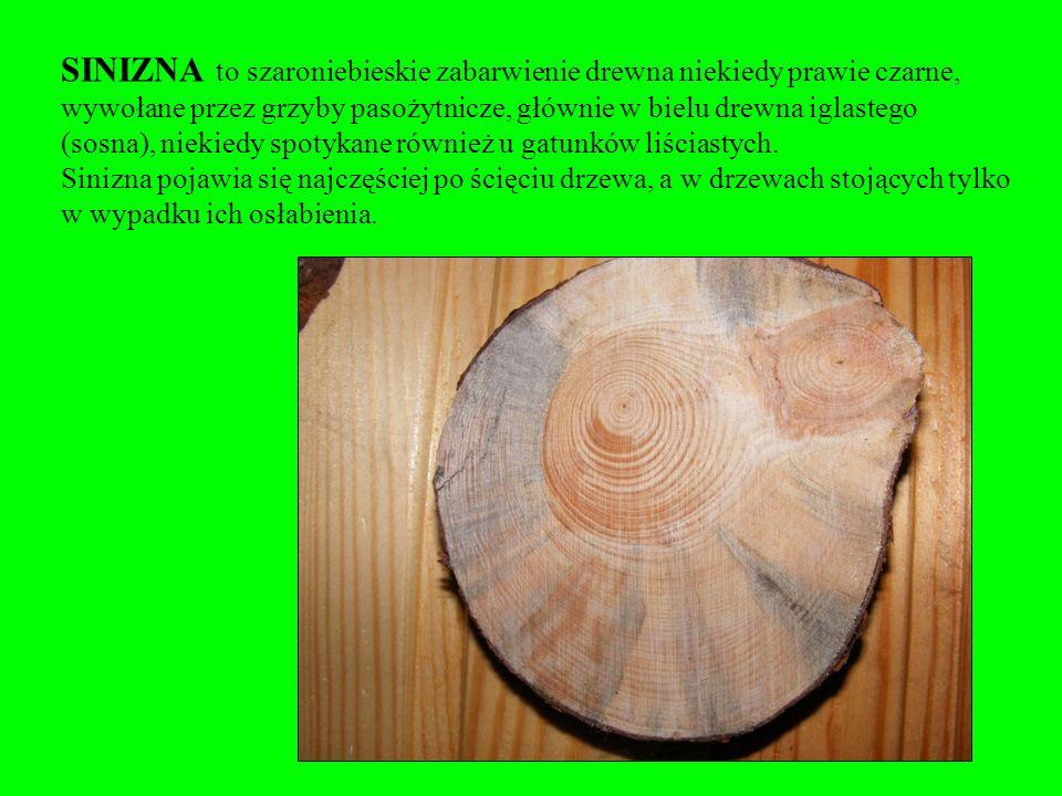 SINIZNA to szaroniebieskie zabarwienie drewna niekiedy prawie czarne, wywołane przez grzyby pasożytnicze, głównie w bielu drewna iglastego (sosna), niekiedy spotykane również u gatunków liściastych.